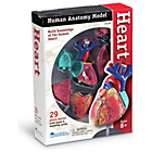 more details on Learning Resources Anatomy Heart.