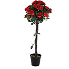 more details on Red Potted Rose Tree.