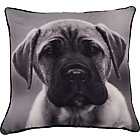 more details on Heart of House Douglas Dog Cushion - Charcoal.