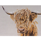 more details on Collection Angus Highland Cow Canvas.