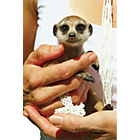 more details on Activity Superstore Meerkat Encounter for Two.