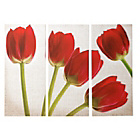 more details on Collection Red Artisan Tulips Canvas - Set of 3.