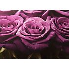 more details on Graham & Brown Plum Roses Row Wall Art