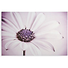 more details on Collection Large Daisy Framed Print.