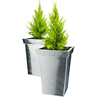 more details on Zinc Patterned Square Planter- pack of 2